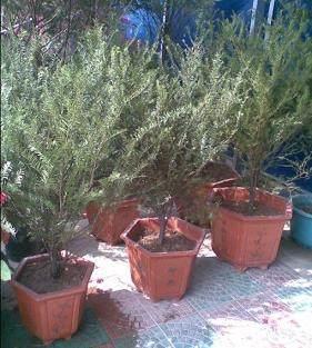 花木换盆怎样移栽上盆的6个方法