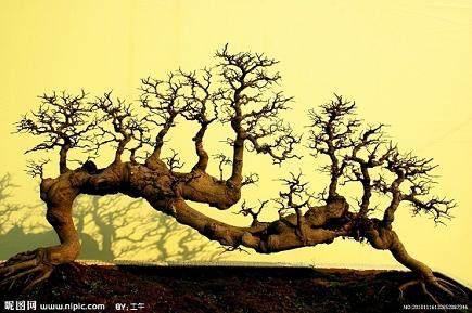 树木盆景桩坯怎么栽植的5个方法