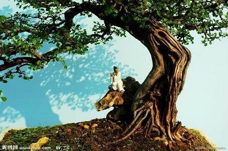 树木盆景造型设计怎么统一协调的方法