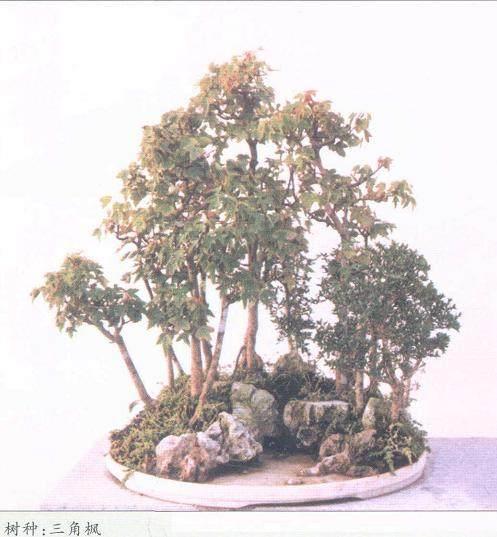 鲍家花园是目前安徽最大的盆景观赏园