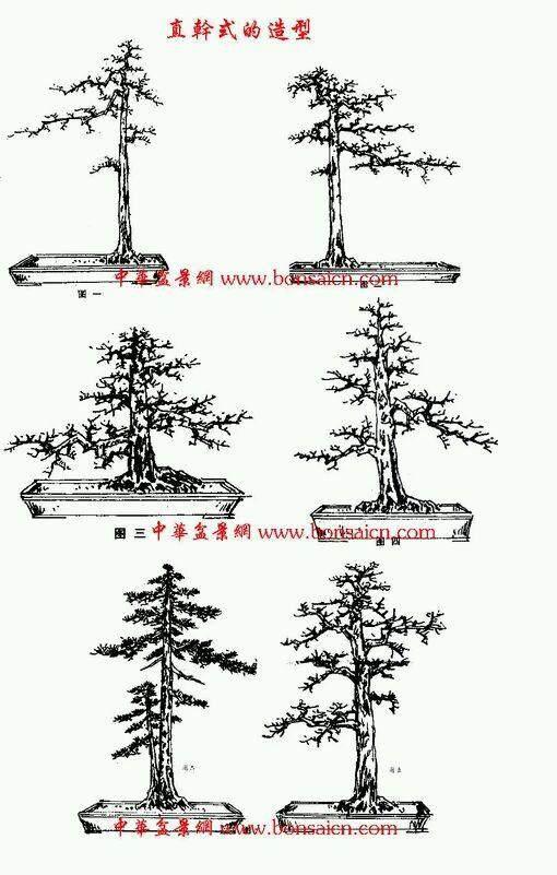 嶺南盆景怎么造型的方法和法度原理