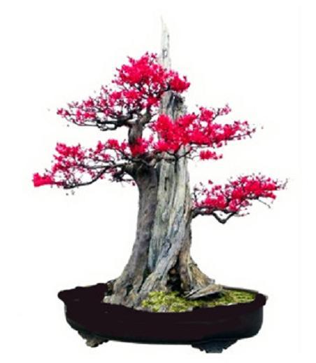紫薇盆景的修剪大致可分為冬季 春季 夏秋修剪