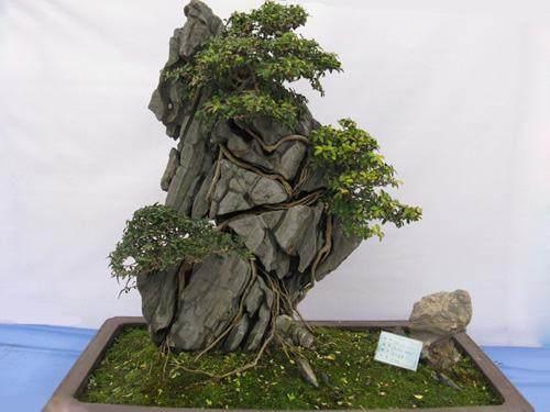 浅谈日本附石盆景的含义