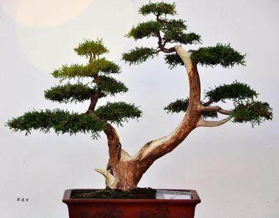 中州盆景风格