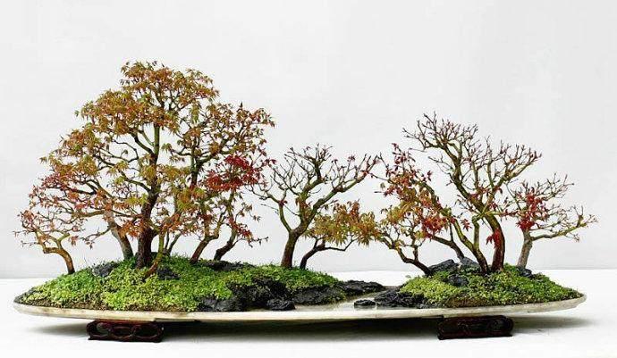 树桩盆景放置在什么地方才好?