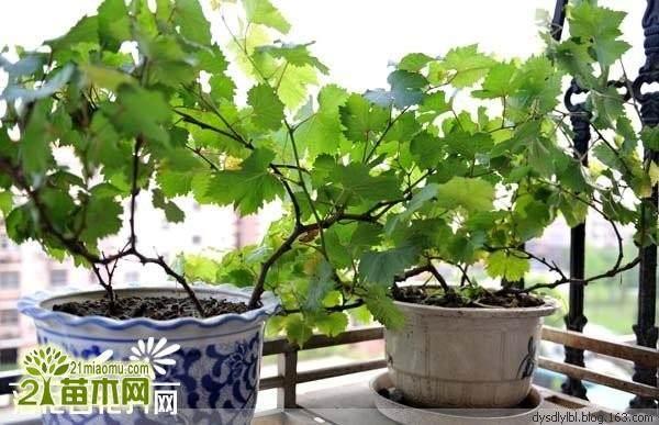 花木盆景怎样生根繁殖新的方法