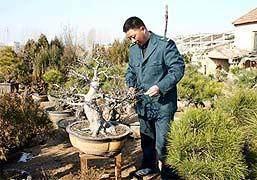 江苏新沂局职工 王以国的盆景业余爱好