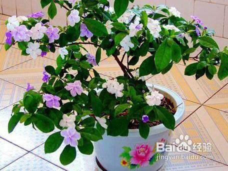 家庭盆栽花木介壳虫的防治