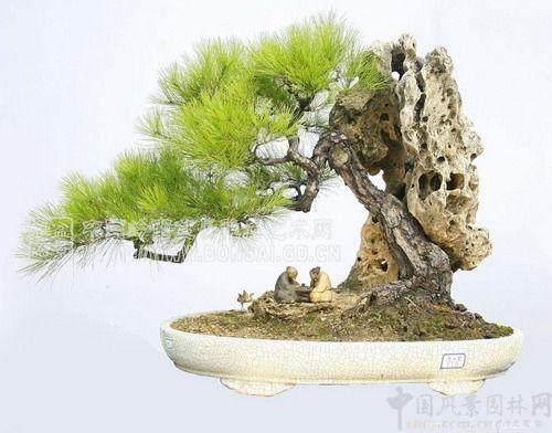 树桩盆景艺术的流派