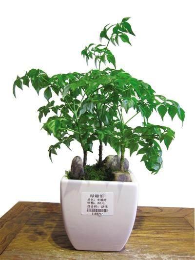 如何判斷盆栽的土壤需要澆水了?