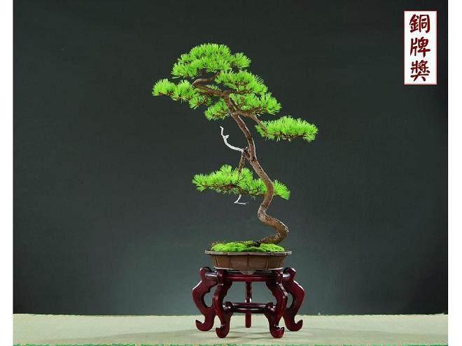 文人树是盆景造型中的一大流派