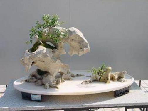 悬崖式树桩盆景的制作要点
