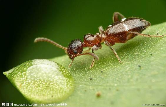 寻找消灭室内盆栽树蚂蚁的好方法
