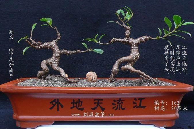 榕树盆景适宜温度