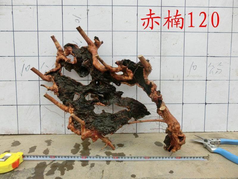 干干的赤楠下山桩表皮是黑色的还能发芽吗?