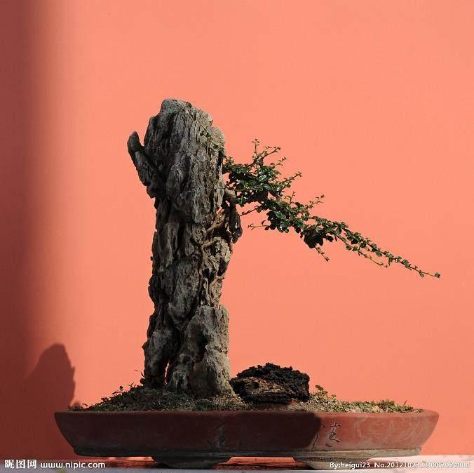 室内植物盆景成为南昌市民争相购买的抢手货