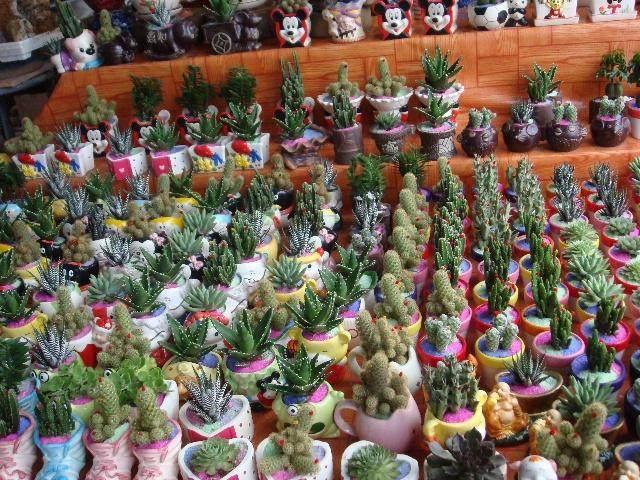 北京盆景批发市场
