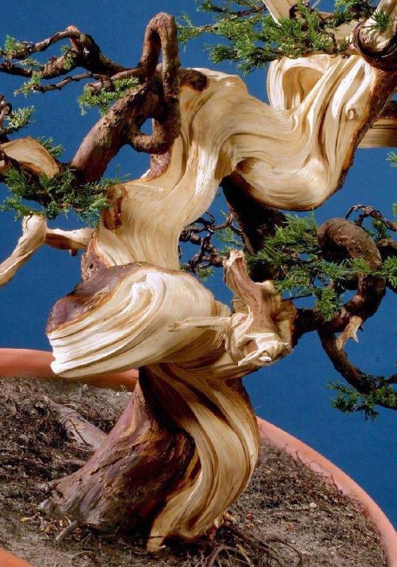 柏树盆景怎么制作丝雕撕雕的方法