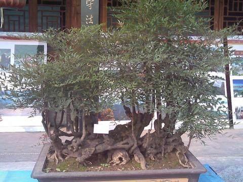 镇江社区举办迎国庆盆景艺术讲座