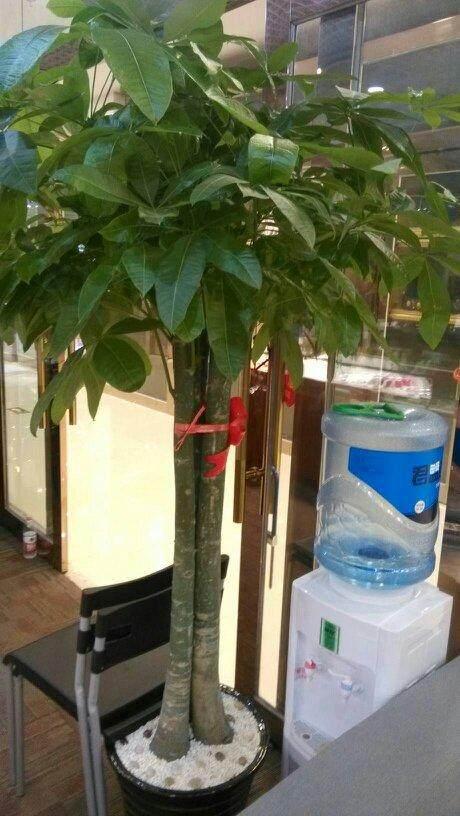 榆树盆景放在花园的前面还是后面风水更好?