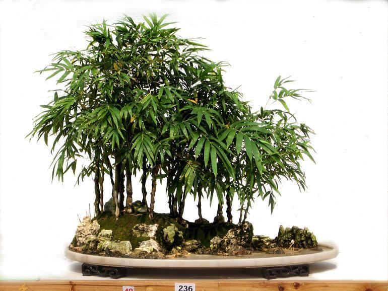 客厅植物盆栽摆放风水禁忌