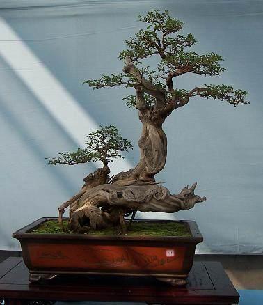 第十二届中国·中原花木交易博览会中州盆景展