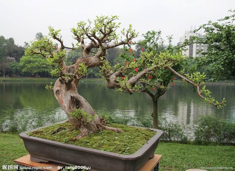 上海植物园赴宁波清点复壮盆景