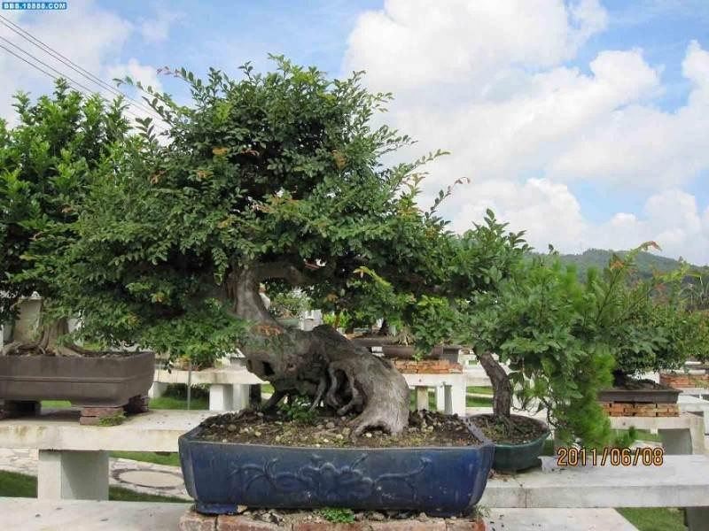 深圳第一届盆景赏石展览会在园博园开幕