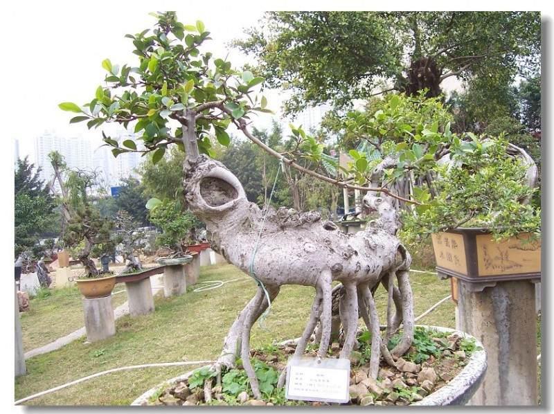 深圳盆景艺术展