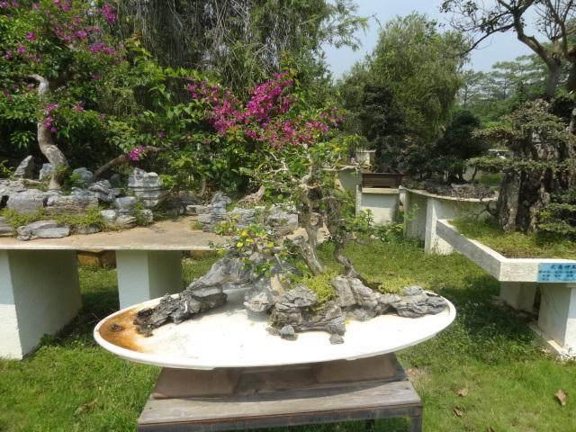 深圳市风景园林协会盆景赏石文化分会成立