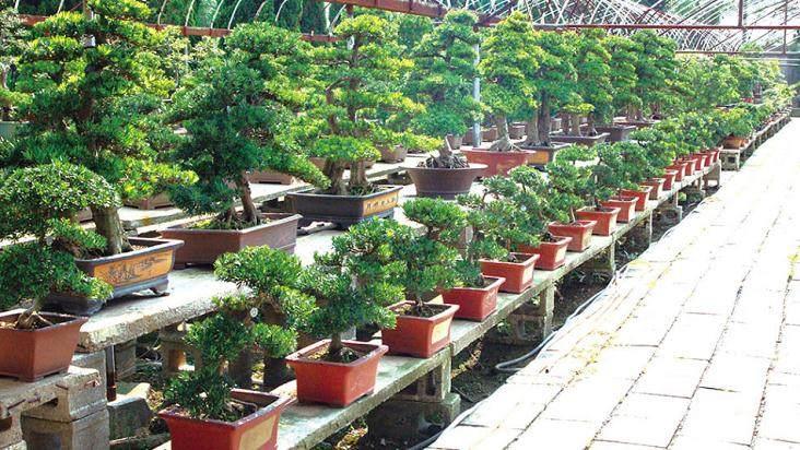 卖绿色植物盆景能赚钱呢?