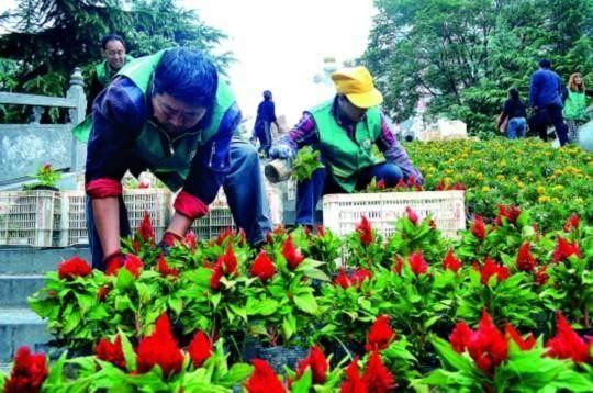 三门峡市开始摆放鲜花和盆景 扮家园迎国庆佳节