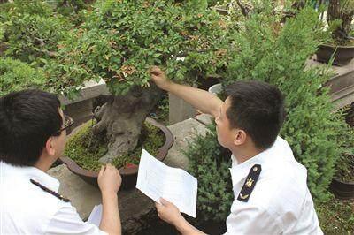 江苏苏州:检验检疫局助推苏式盆景走向国际