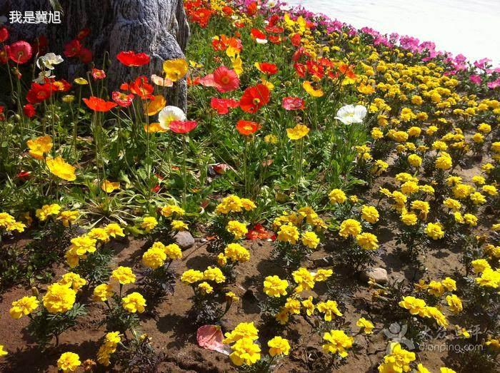 天津花卉批发市场有盆景室内盆栽卖吗?