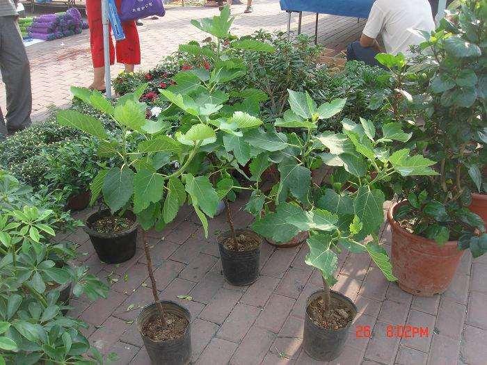 室内盆栽植物枯黄和浇水有没有关系