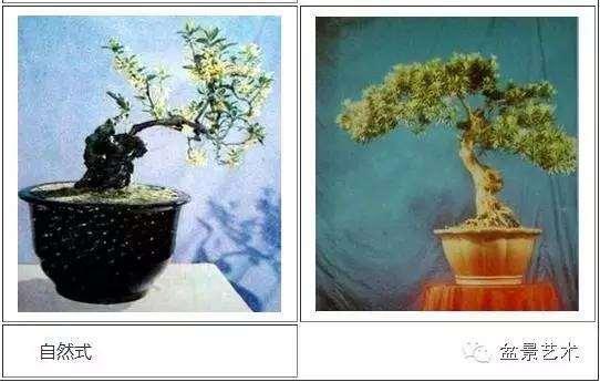 川派盆景的造型風格你知多少?
