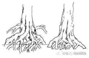 老崔也来玩玩手绘盆景造型