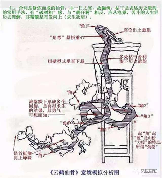 怎么制作悬崖盆景的方法