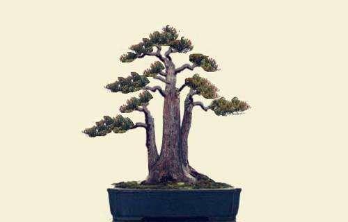 蟠扎法树木盆景造型基本步骤