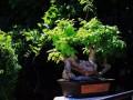 最适合室内的盆景植物 快来看看吧~