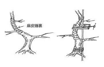 盆景树干部造型美及其整形法