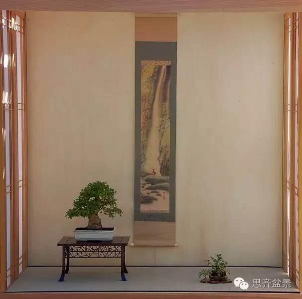 三角枫盆景如何完成蜕变走上展台