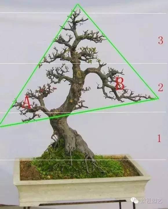 怎样定位裁截树桩盆景的方法