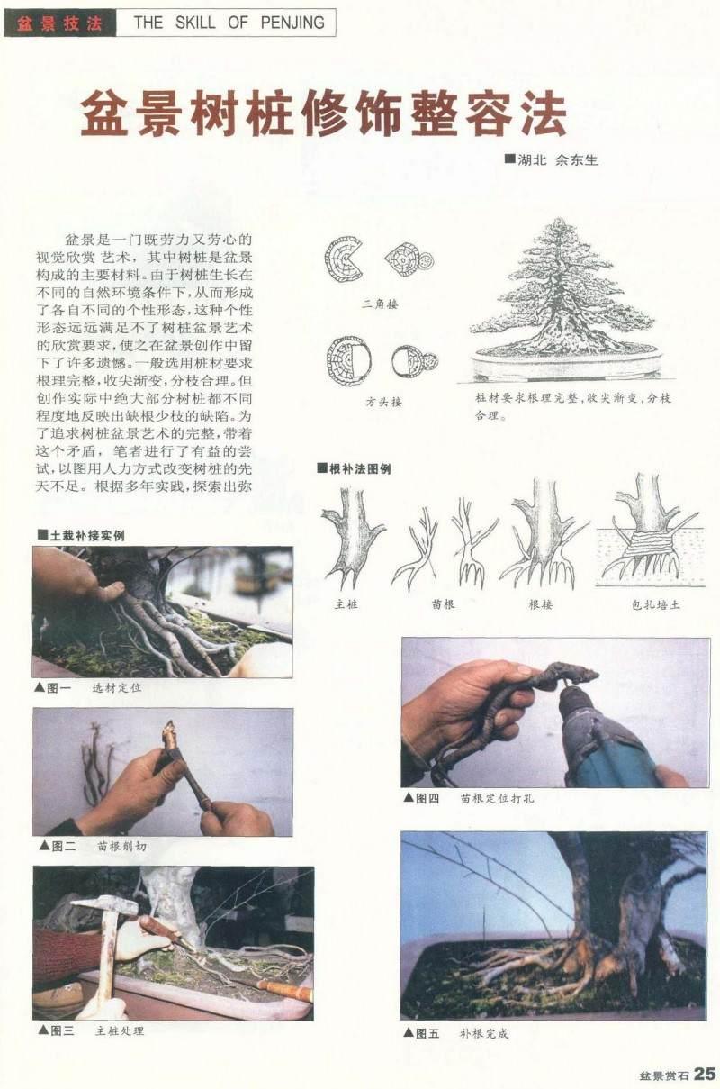 盆景树桩修饰整容法【图解】