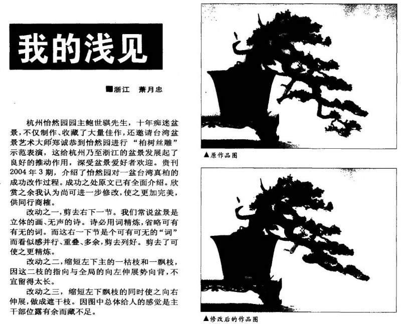 怡然园对一盆台湾真柏的成功制作过程