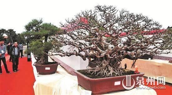 设计赛·5000元 征集晋江盆景协会形象标识LOGO设计
