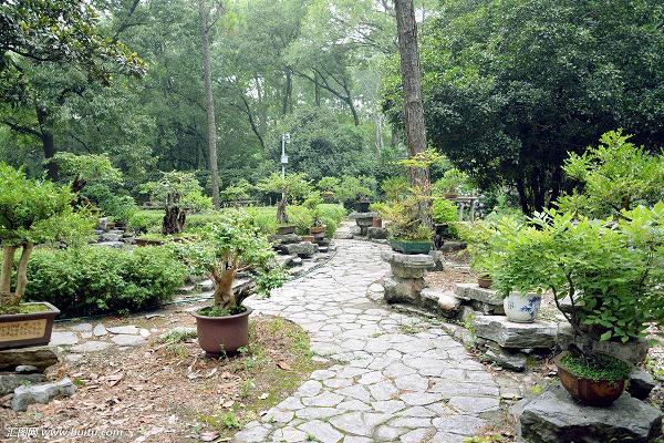 基于地域性特色的盆景园规划设计