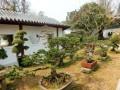 沙洋金花湖盆景园的总体规划