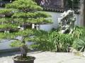 盆景园重要分区规划设计