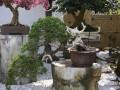 我后来订了花木盆景杂志 慢慢的就对盆景有了些了解